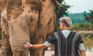 Bathe an elephant